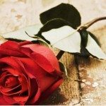 Rose Day pic apps