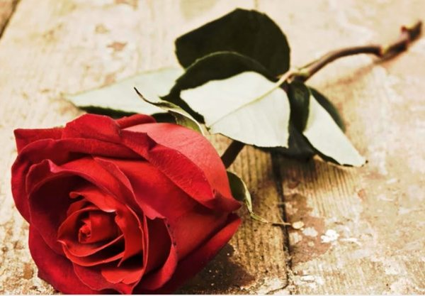 Rose day pic apps perfect for Valentines